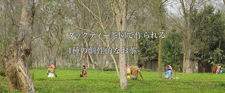 ダックティー茶園で作られる4種の個性的なお茶。ダックティー茶園の茶摘み風景