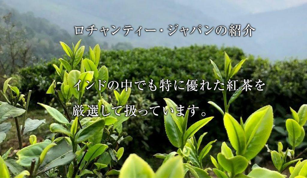 ロチャンティージャパンの紹介 インドの中でも特に優れた紅茶を 厳選して扱っています。ダージリン新芽の写真